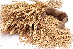 Grains in Pet Foods?