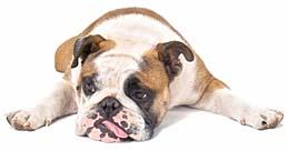 Dog Food Recall News